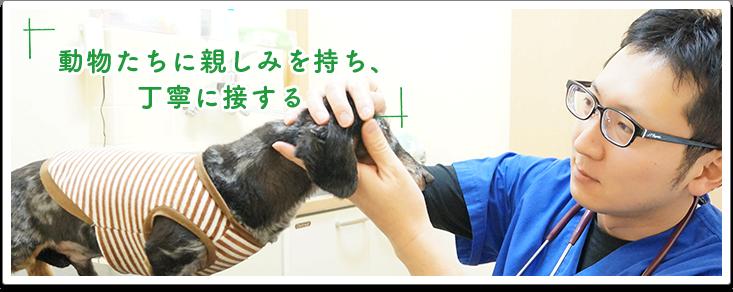 動物たちに親しみを持ち、丁寧に接する